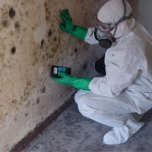 Mold Removal in New Jersey, Philadelphia Pennsylvania, Delaware