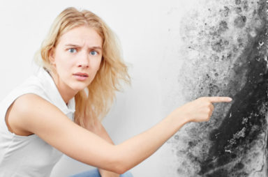 What to Look for in a Mold Removal Company in 2020