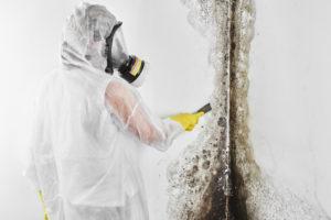 Mold removal in NJ, PA, DE